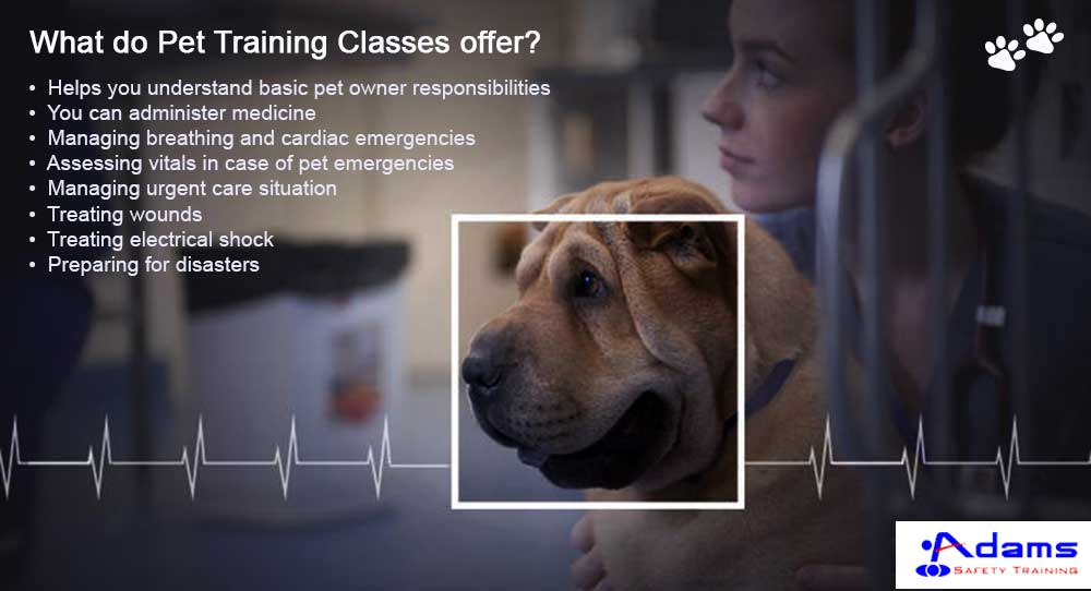 Get Trained for a Pet Emergency