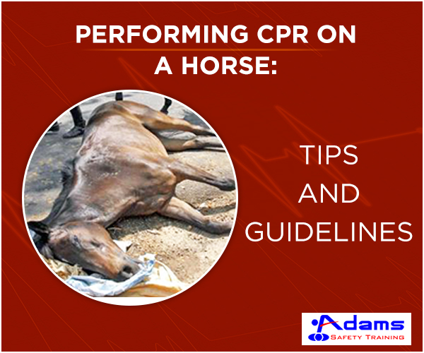 Horse CPR