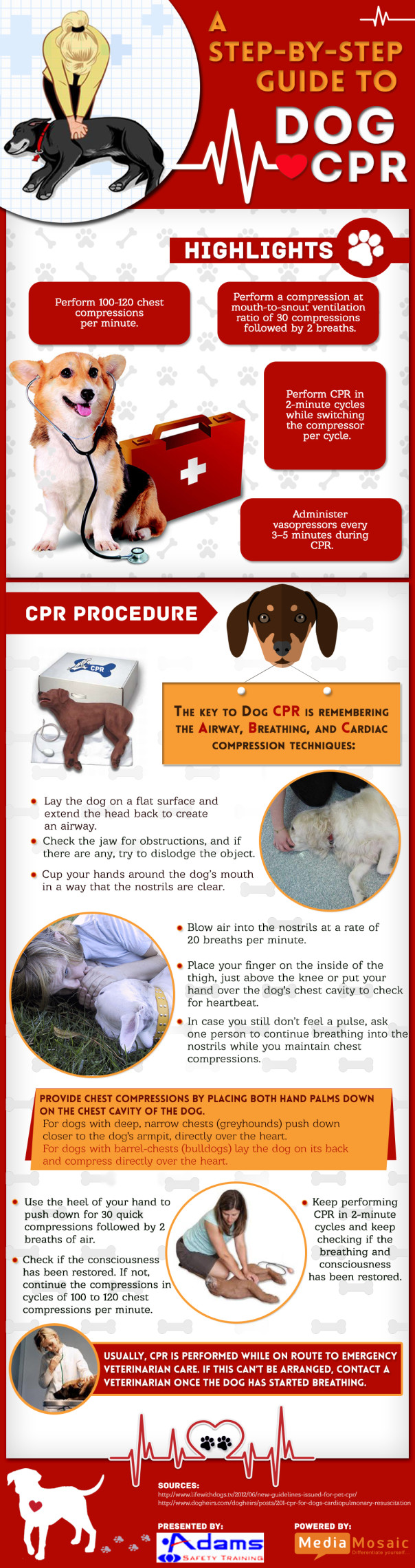 How To Perform Cpr On A Dog Infographic Adams Safety